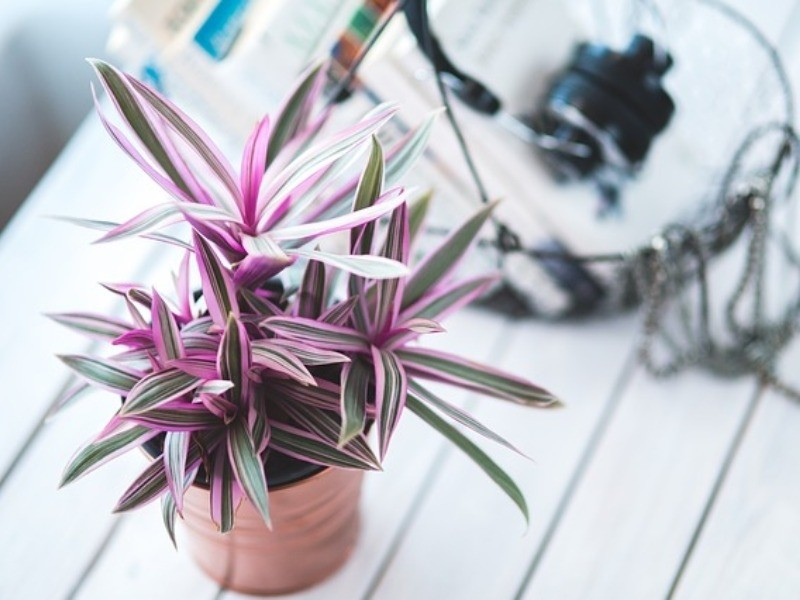 indoor-plants-for-air-pollution-2